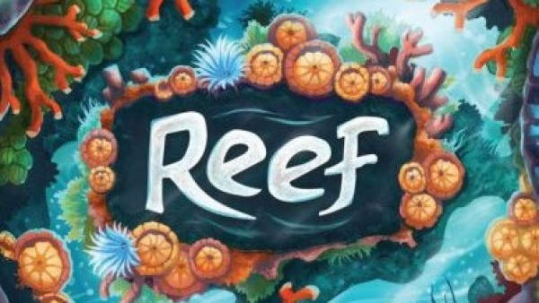 Rediscover The Wonder Of The Ocean In Reef