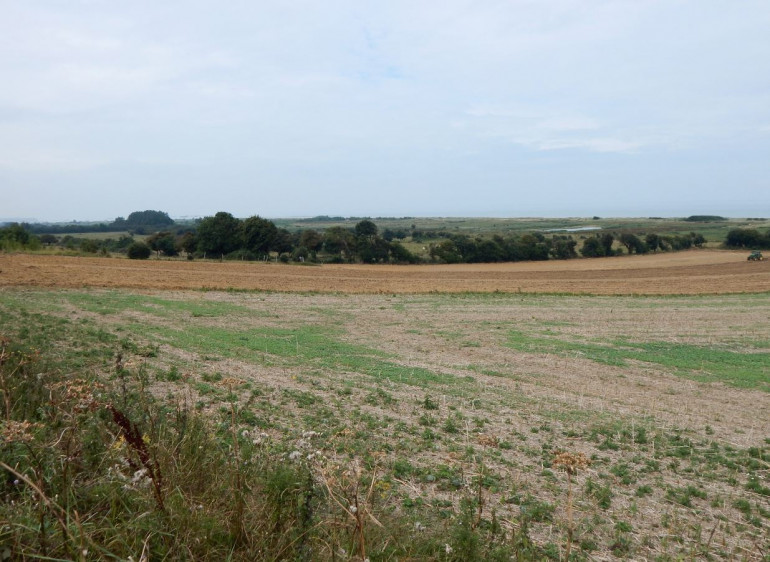 A view if THIS battlefield as it looked in the summer of 2014.