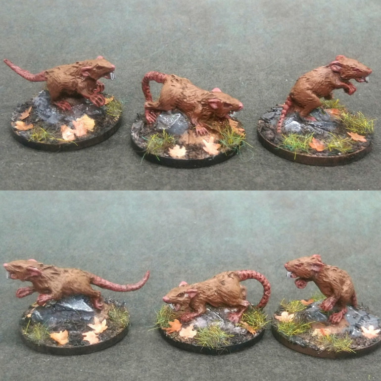 Dirty rats and boars