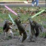 sithsquirrel14